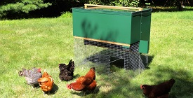 Halflap Henhouse Portable Chicken Coop with Chickens